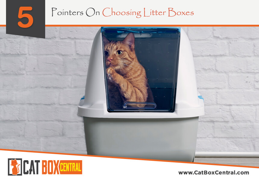 what are litter boxes