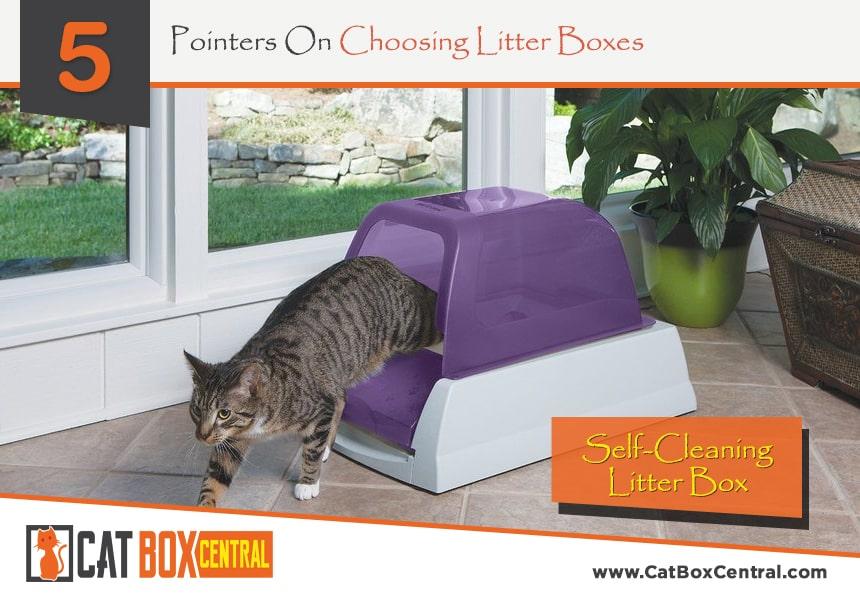 cat litter boxes
