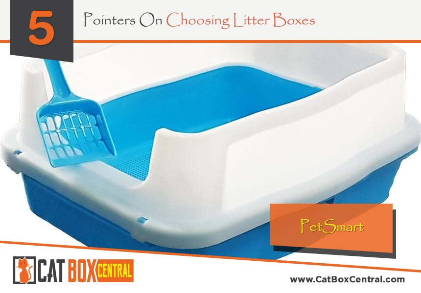 guide to litter box