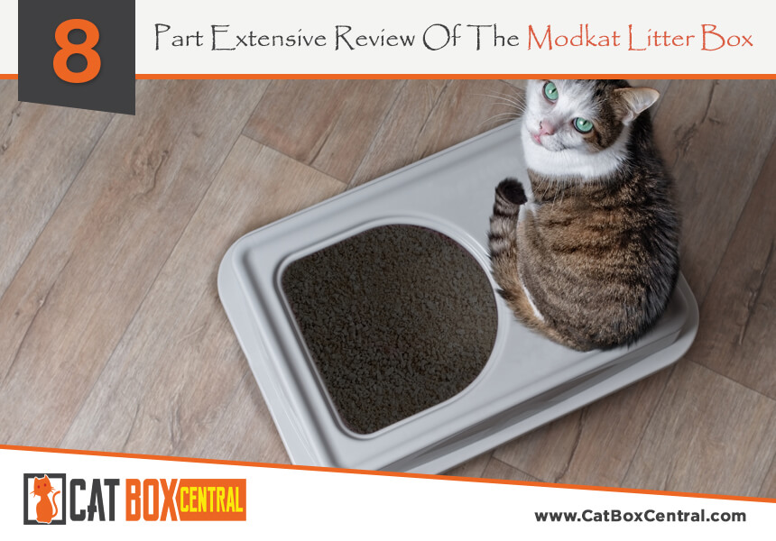 best litter box