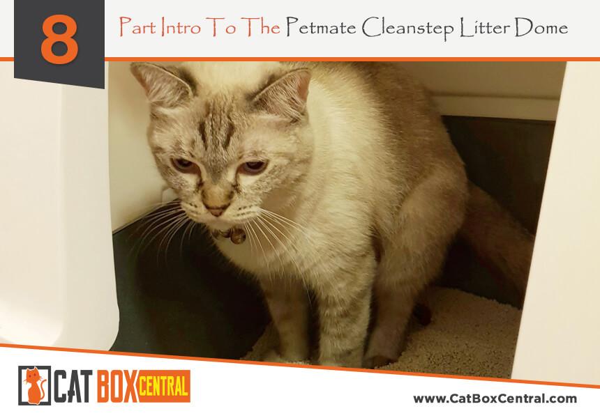litter box review