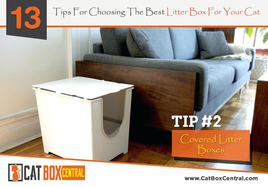 litter box tips