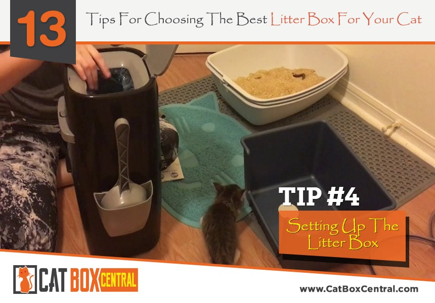 how to choose a litter box